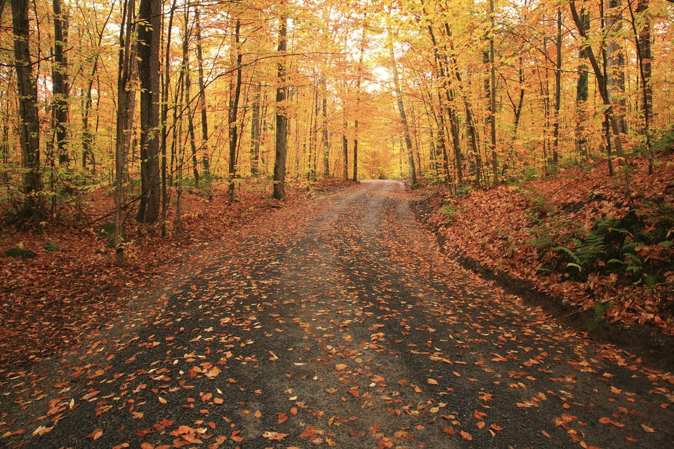 Fall Foliage Driving Tours New York State