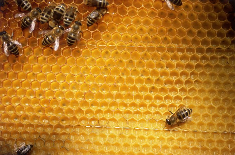 Bees construct honeycombs from a natural wax they secrete.