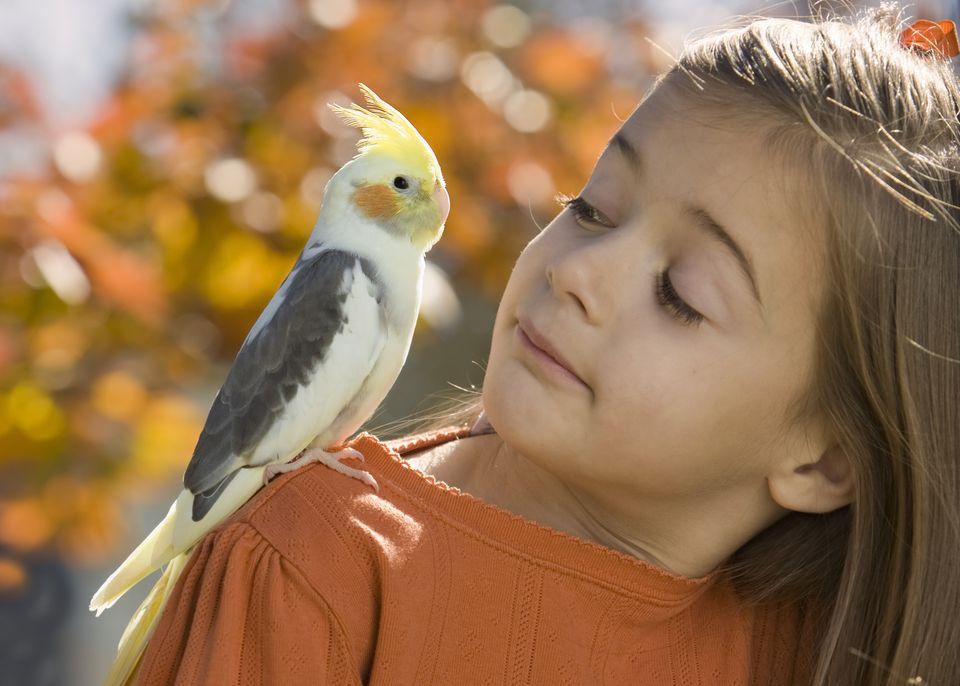 Cockatiels Make Sweet Pets For Children