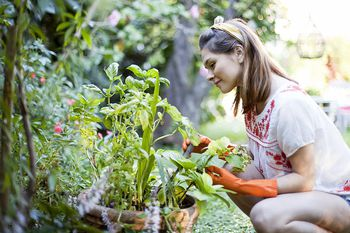 top tips for a successful home garden