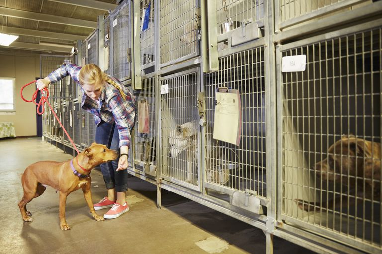 Female volunteer with a dog in animal shelter