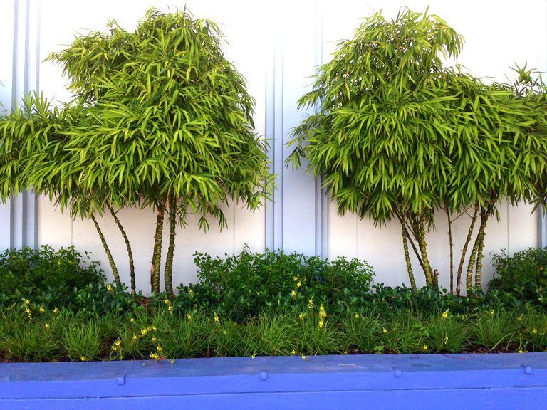 Aprende a combinar plantas en el jard n for Jardin que planter en janvier