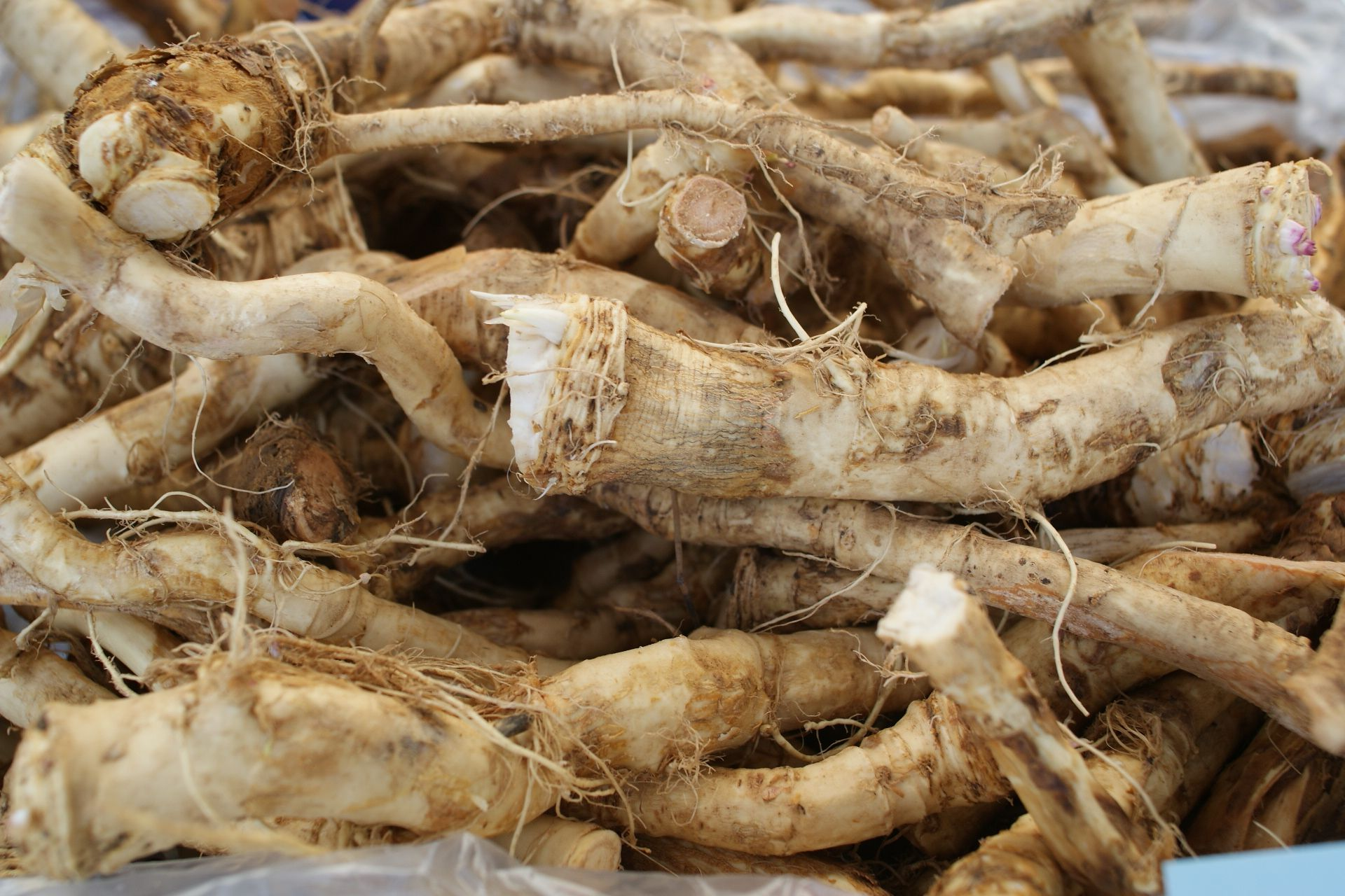All About Fresh Horseradish Root