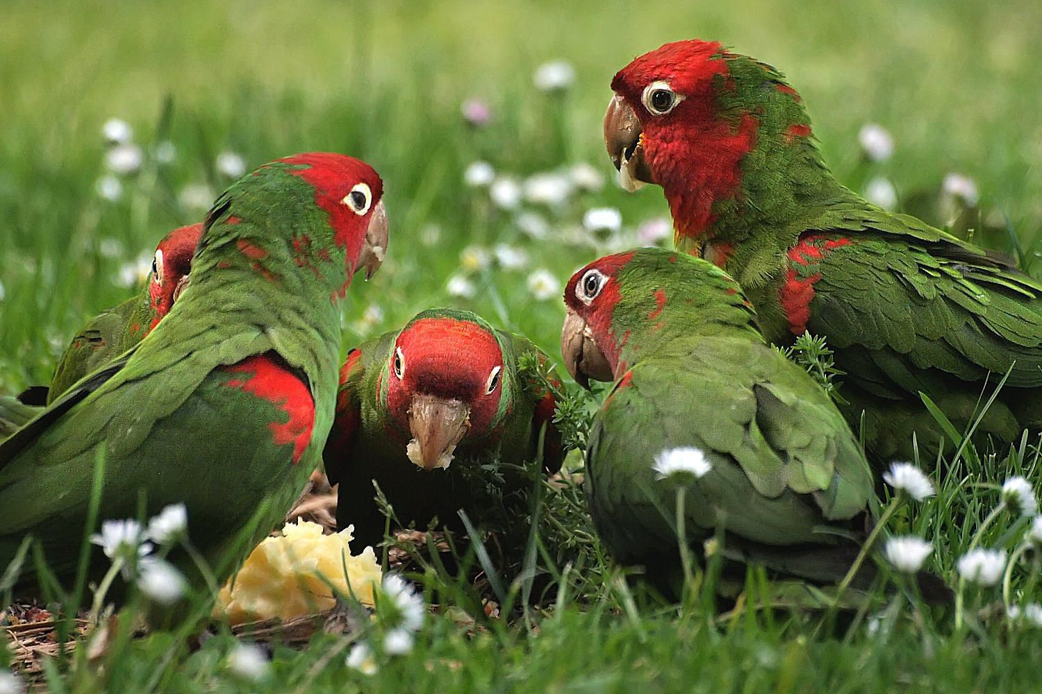 Attracting Parrots To Your Yard