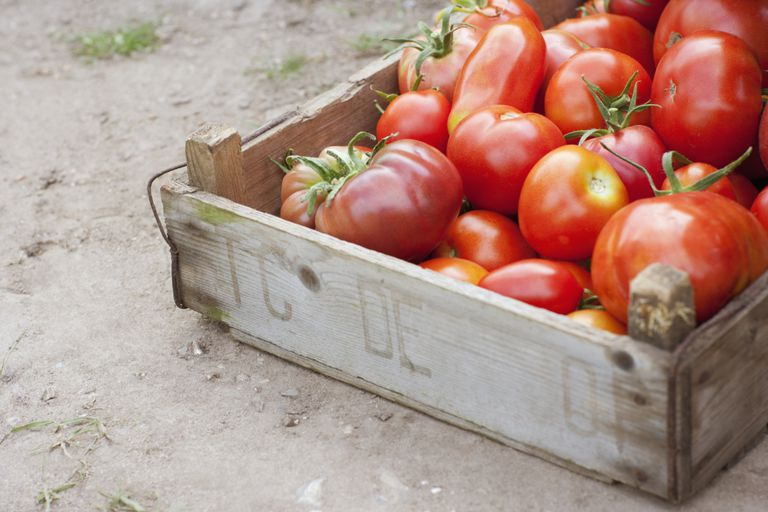 Tomatoes in a crate