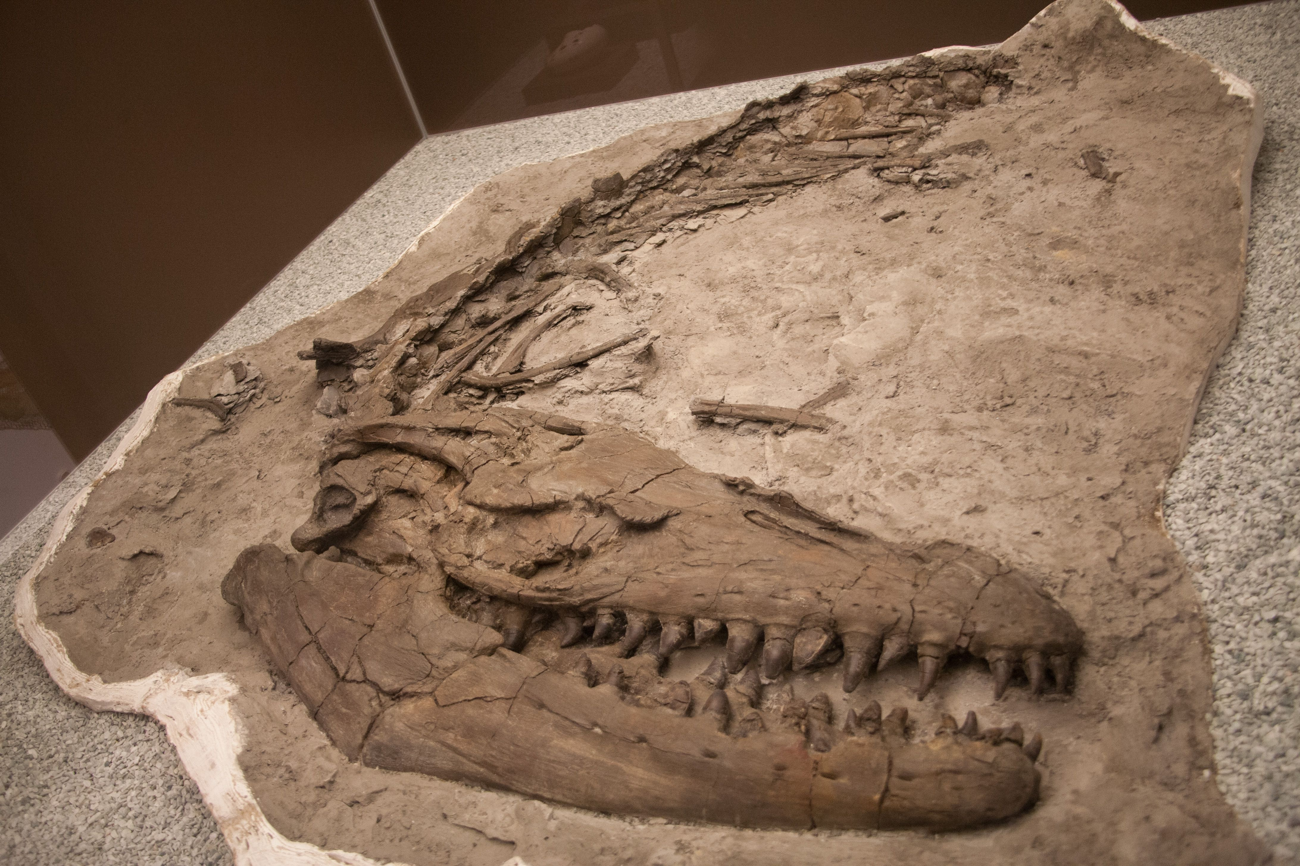 mosasaurs the deadly marine reptiles