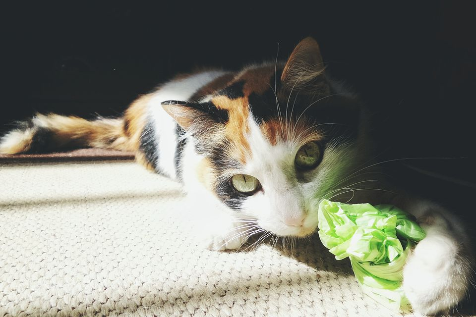 Portrait Of Cat With Green Polythene