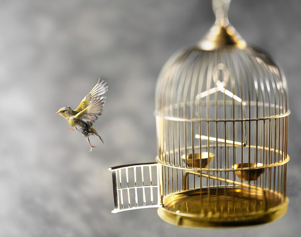 Bird escapes from bird cage