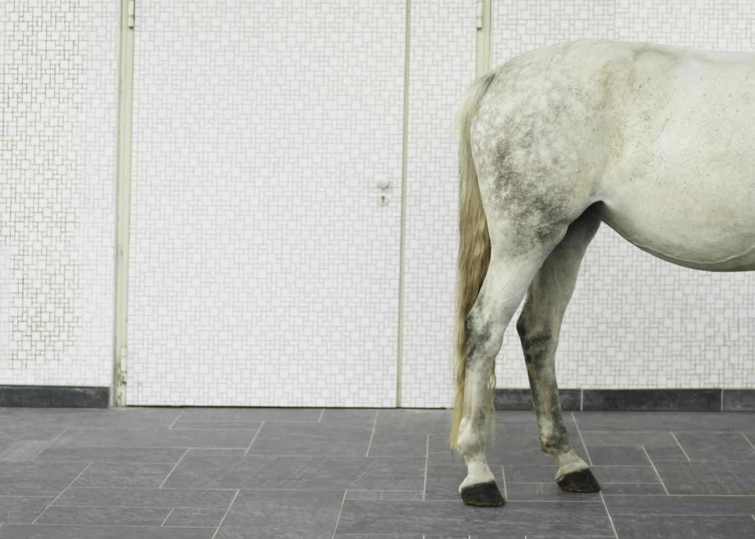 Hind Leg Problems In Horses Causes And Treatment