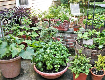 10 Ve ables You Can Grow in Containers