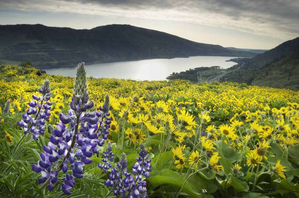 Rowena Crest , Columbia River Gorge, Oregon