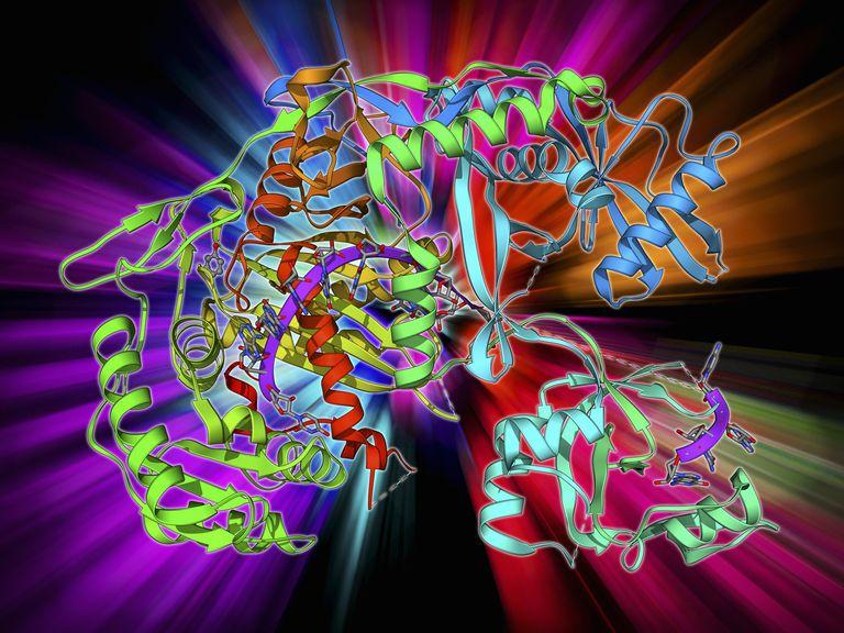 Argonaute protein and microRNA