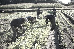 young organic farm workers