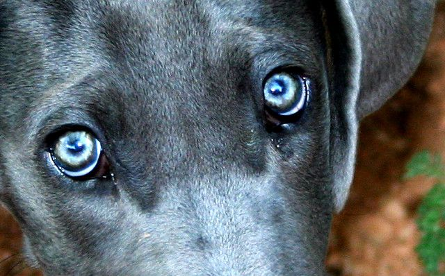 Closeup of a Dog's Eyes