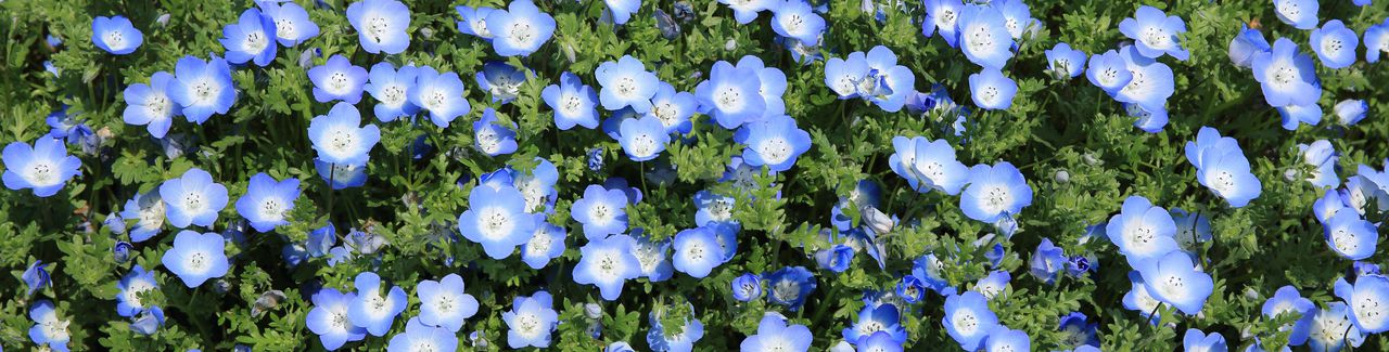 Spring yard cleanup checklist for lawns landscaping blue flowers on a grassy field mightylinksfo