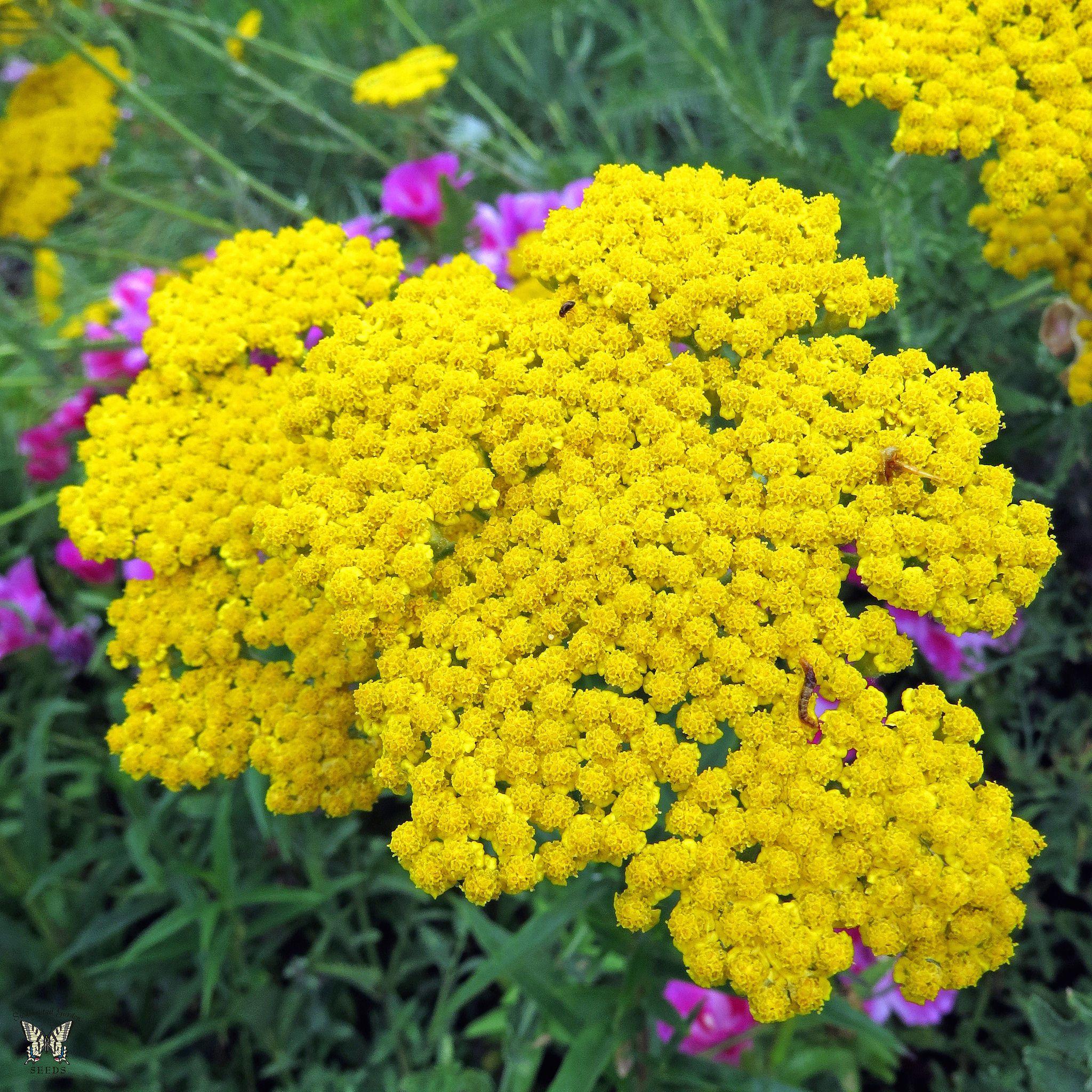 12 low maintenance perennial plants for No maintenance plants perennials
