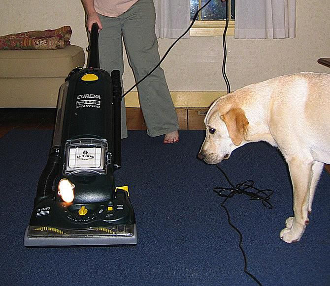 dog and vacuum cleaner