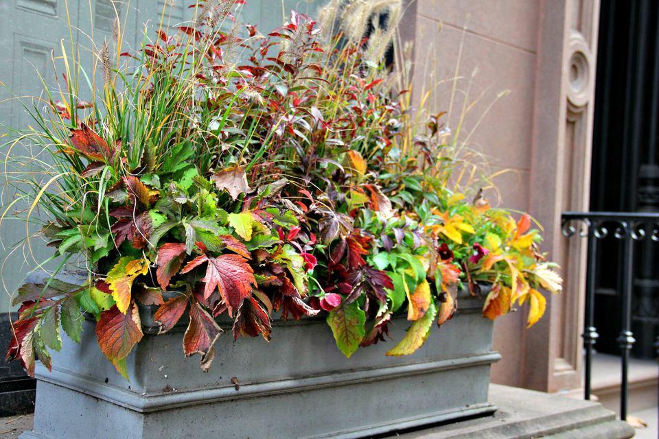 fall window box arrangement