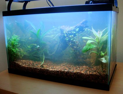 How to clean and rejuvenate old air stones for Cloudy water in fish tank solutions