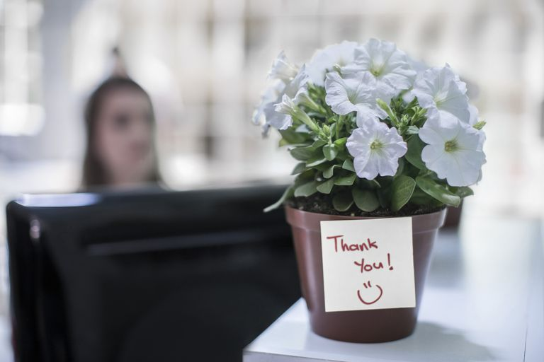 Potted plant with thank you note on office table