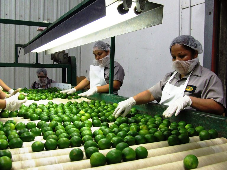 Workers at TexStarr in Pharr, TX utilize the utmost in modern food safety repacking Mexican limes for distribution in the U.S.