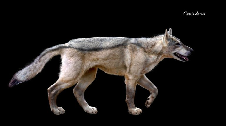10 Facts About the Dire Wolf