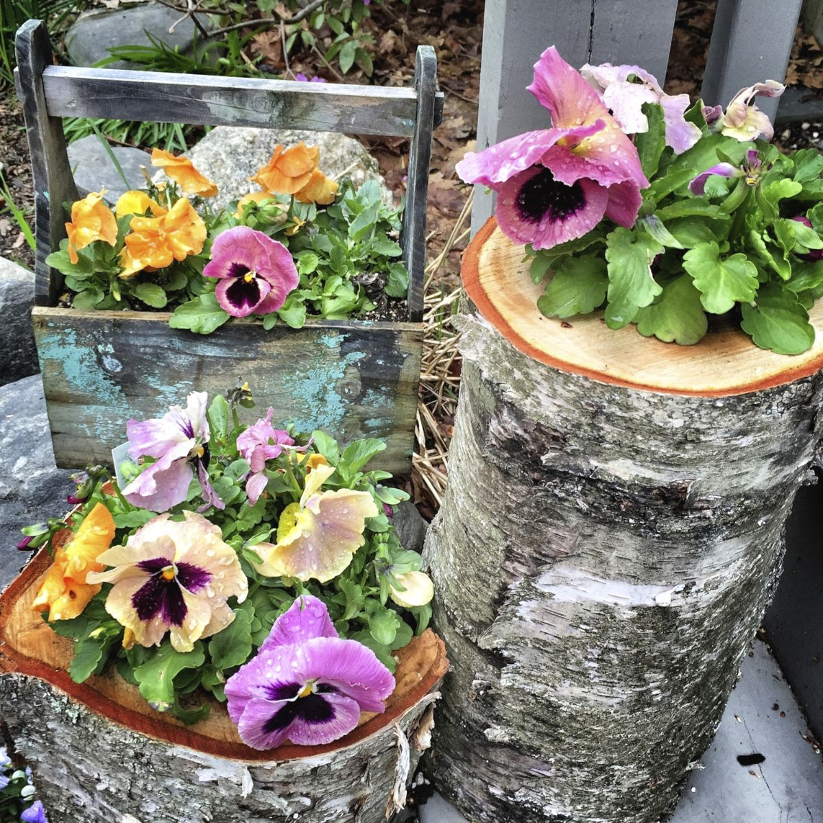 Container Planter: Choosing Plants For Container Gardens