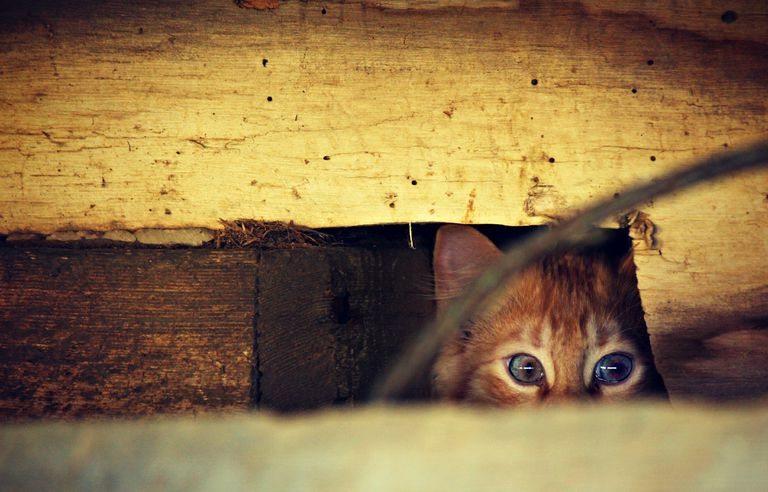 A stray cat hidding under a house.