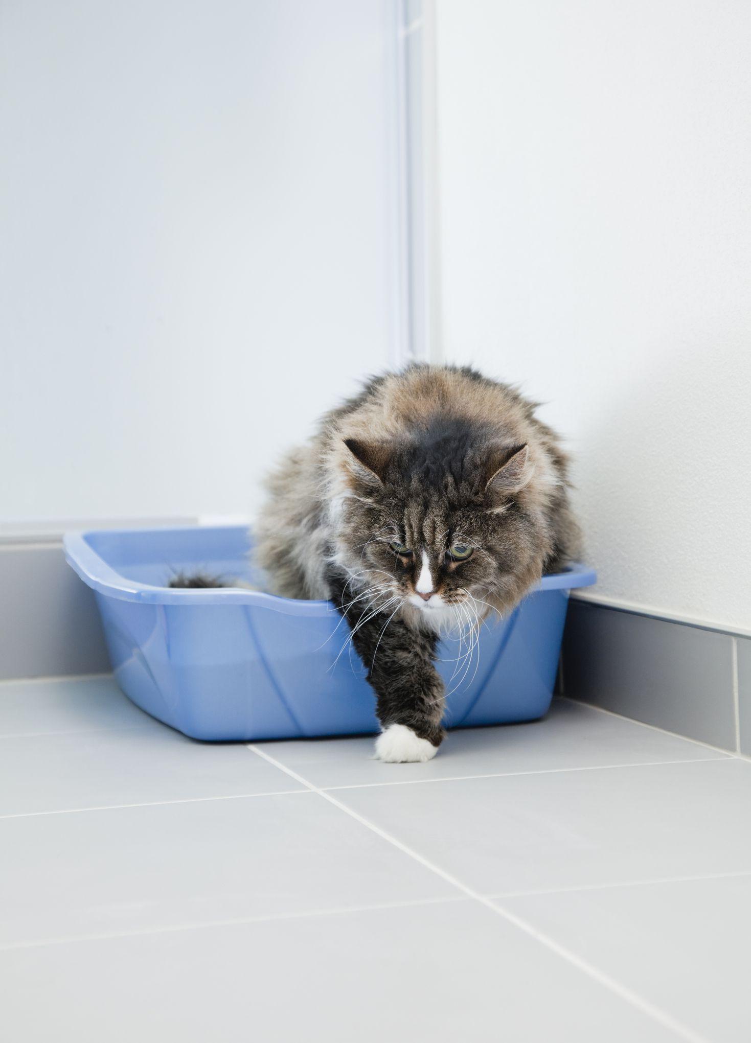 Cat Training Solving mon Litter Box Problems