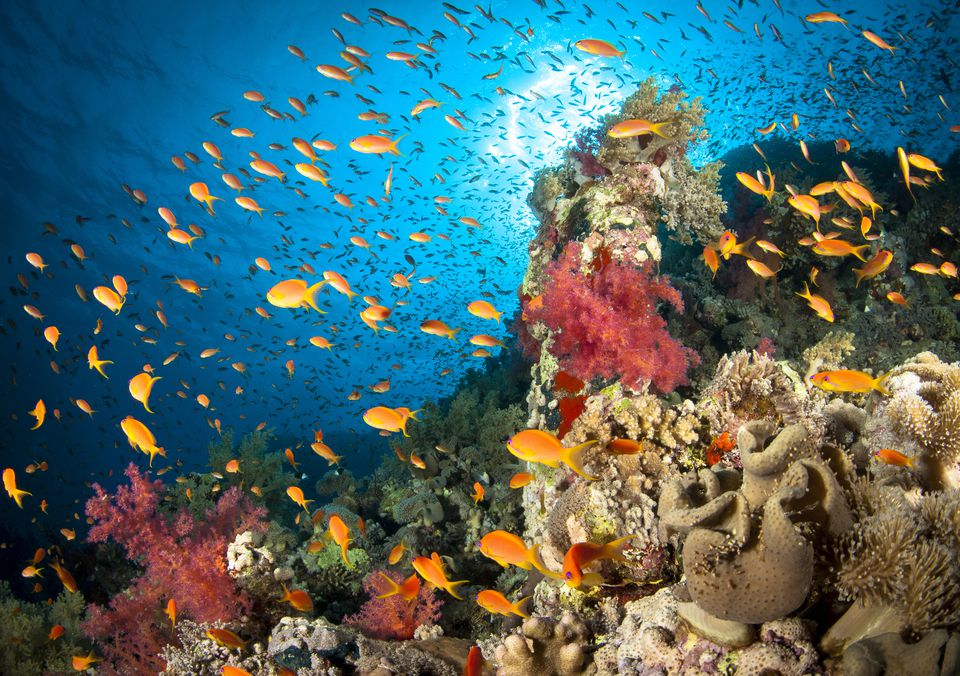 Five Reasons to Scuba Dive Egypt's Red Sea