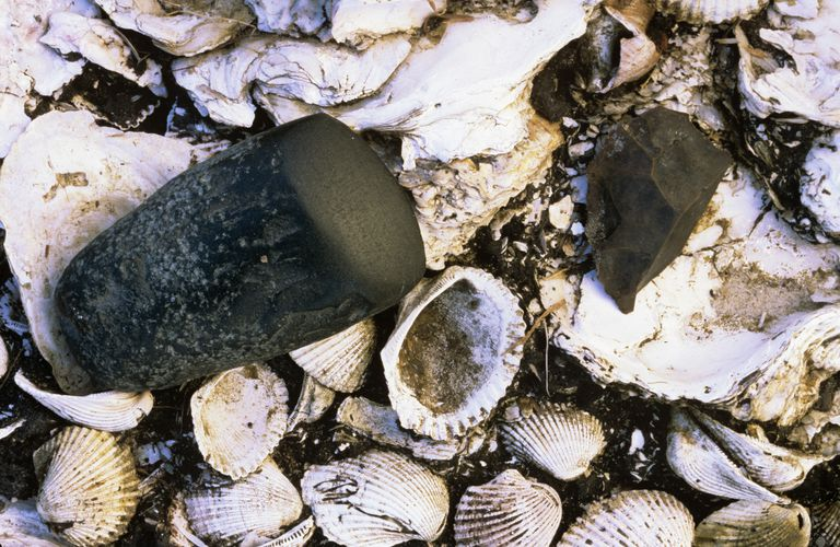 Stone axe and chip found in a midden in New South Wales
