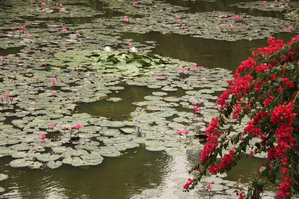 xishuangbanna botanical garden