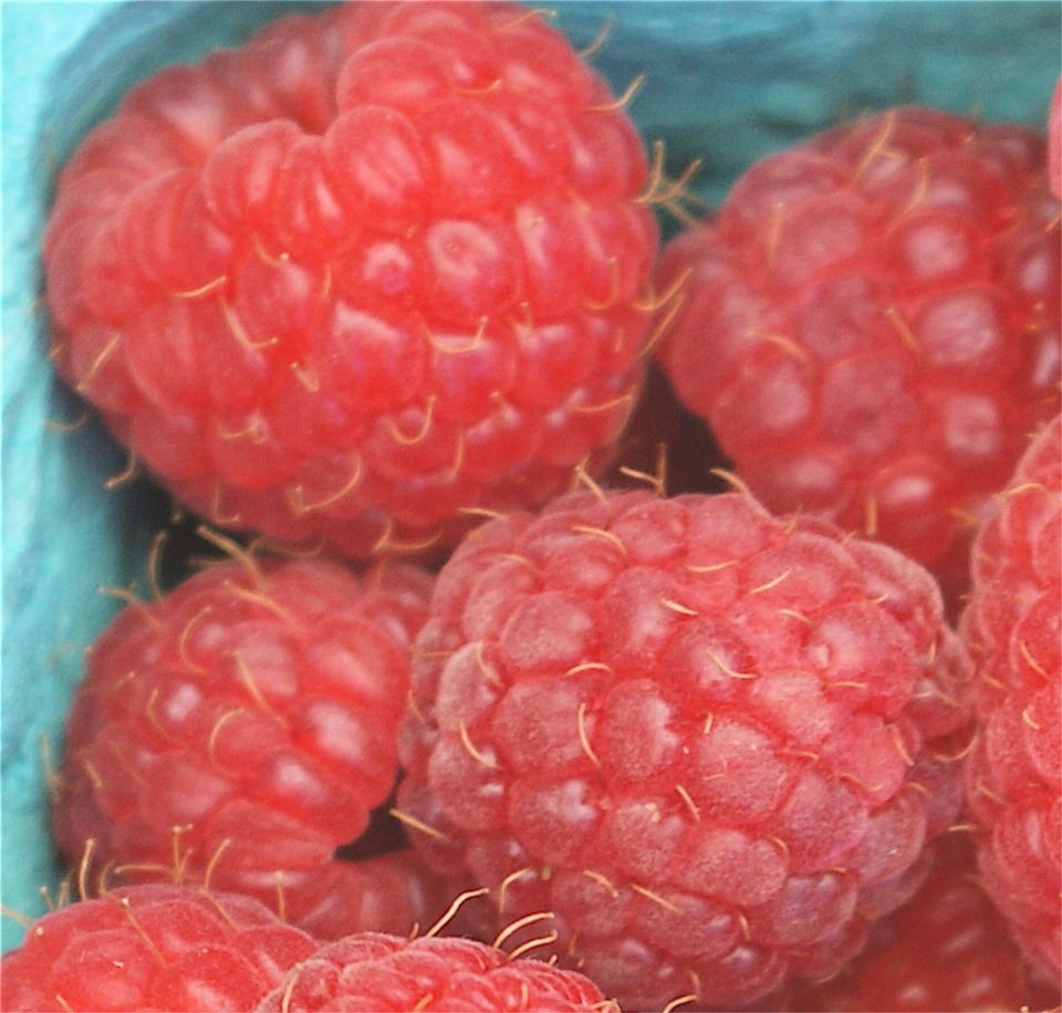 Image of Raspberries