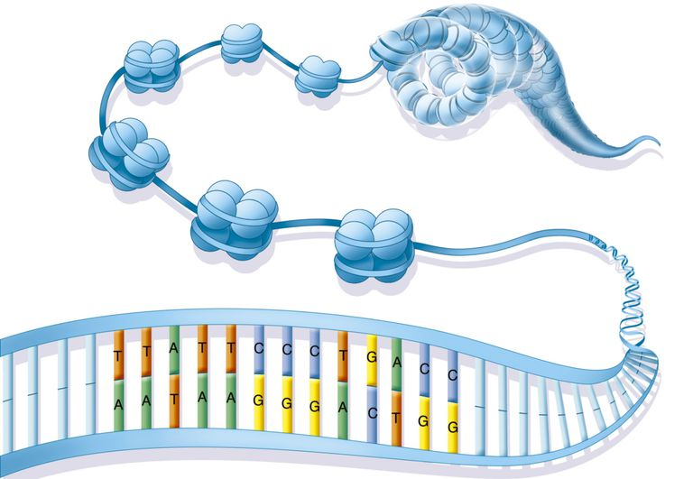 Chromatin and DNA Compaction