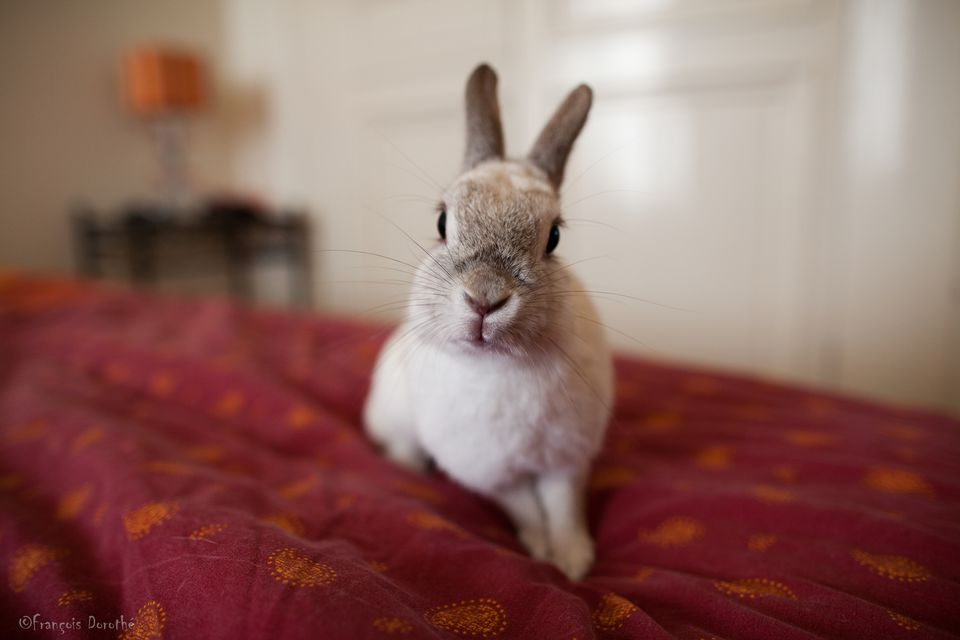 Cool Apartment Pets Exotic Pets For Apartment Living