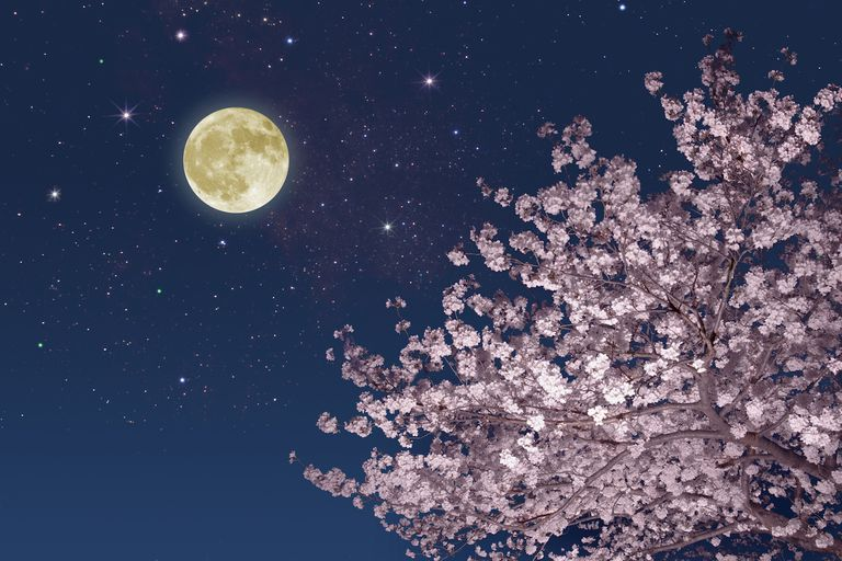 Spring Moon Blossoms