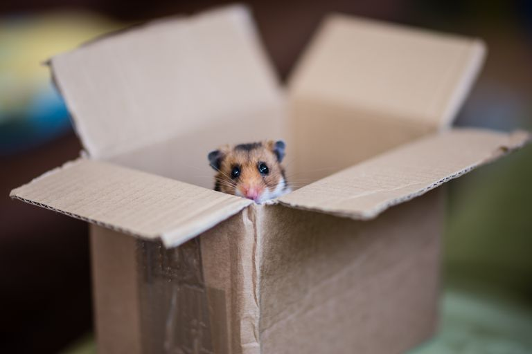 Small Business Hamster