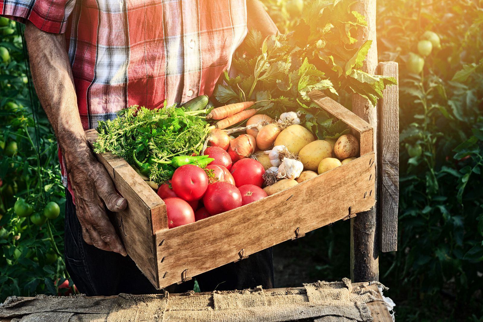 Csa Montreal Organic Food Baskets Pros And Cons