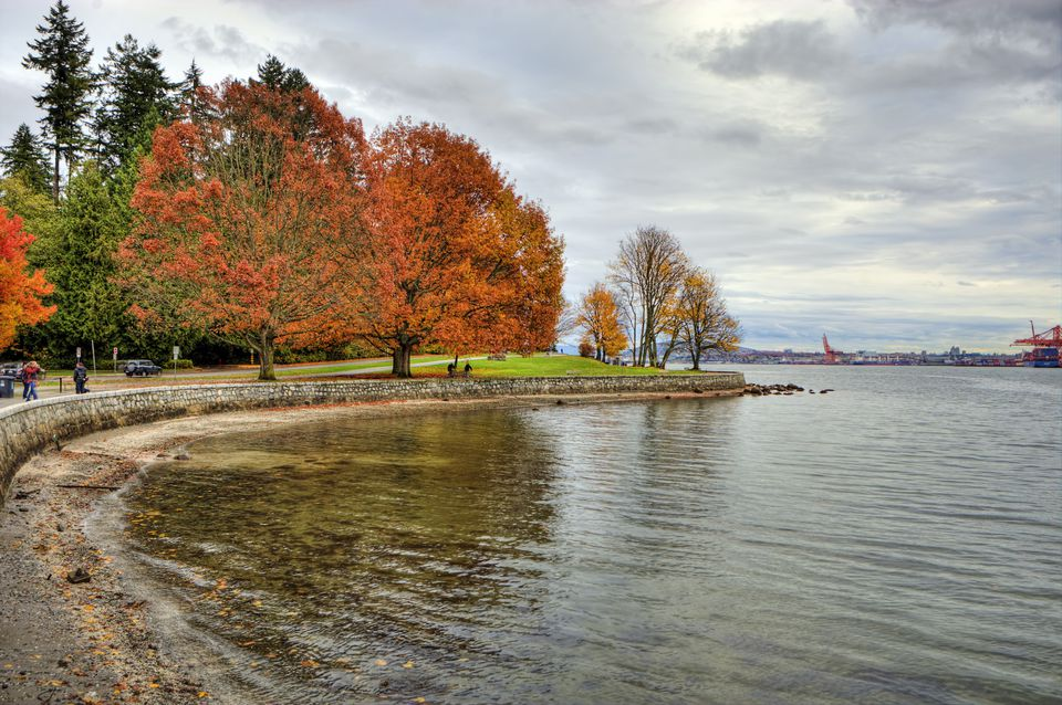 Fall Foilage at Stanley Park, Vancouver