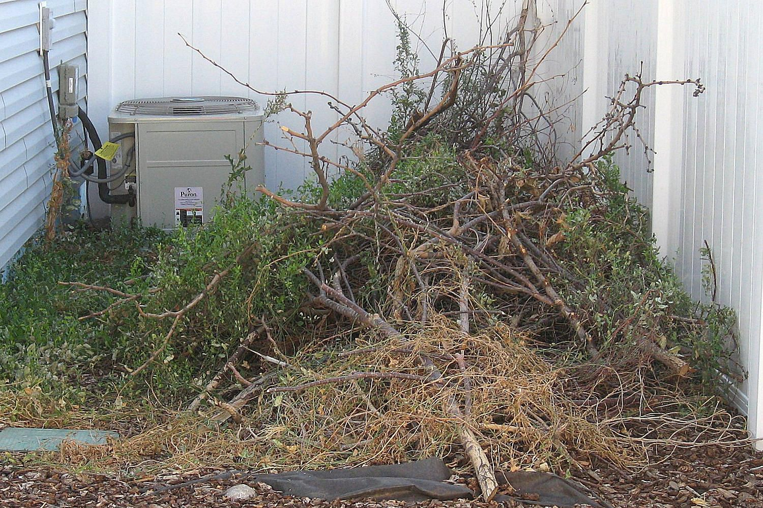 use a brush pile to attract birds looking for shelter
