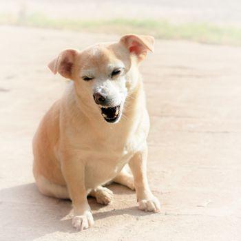 Dog Ate Cat Food And Has Diarrhea