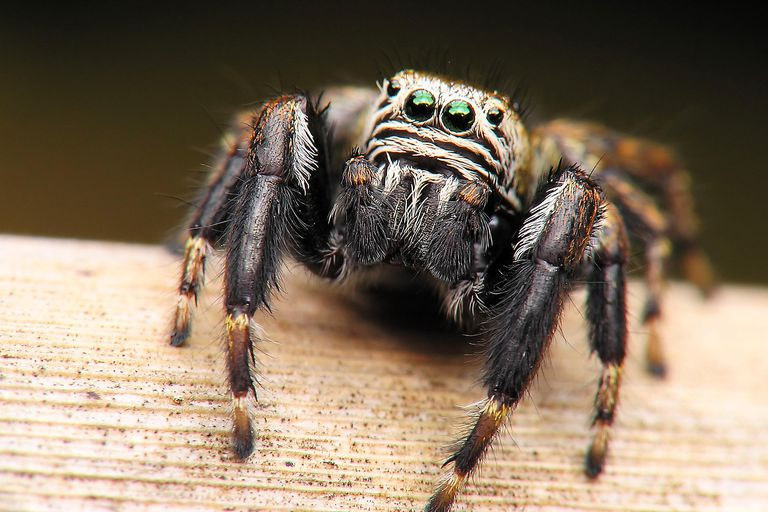 There are more than 100,000 species of arachnids alive today.