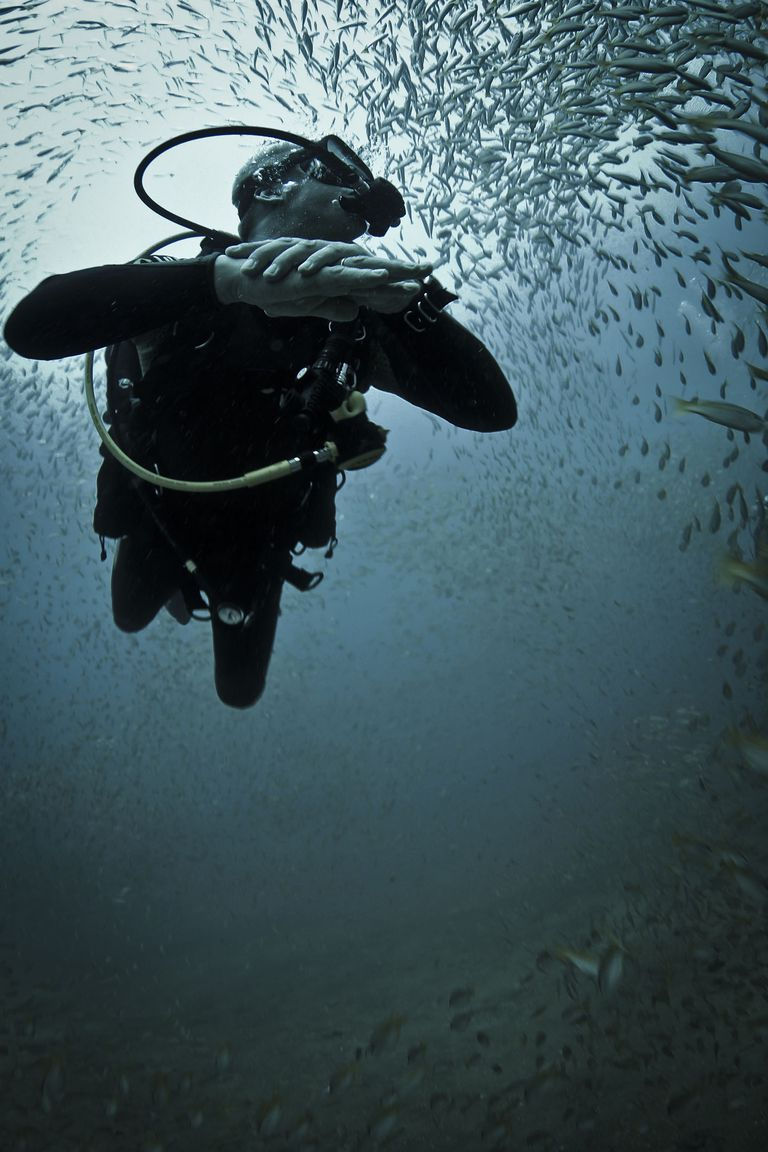Scuba Dive Near the Surface With Silversides