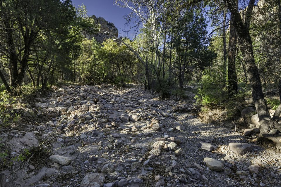 Image: dry creek bed in nature.
