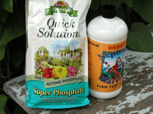 Fertilizing Flowers for More Blooms