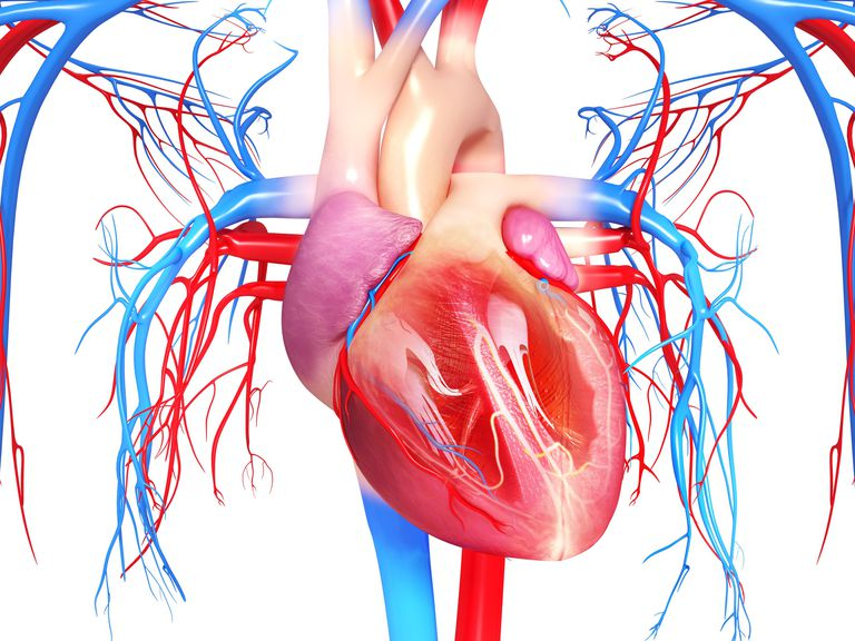 The pericardium is a sac surrounding the heart.
