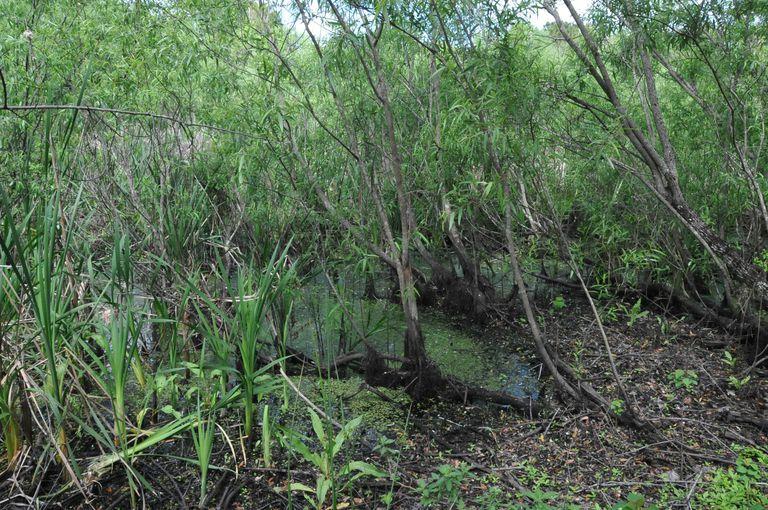 Windover Bog, Florida