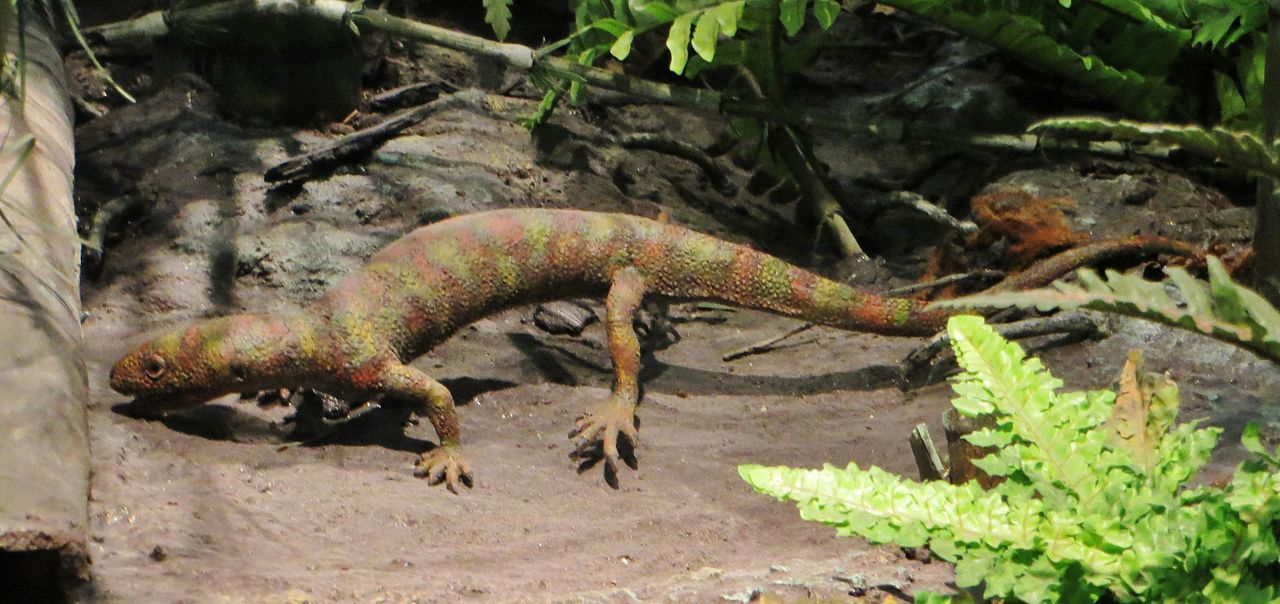 10 Fun Facts About Reptiles