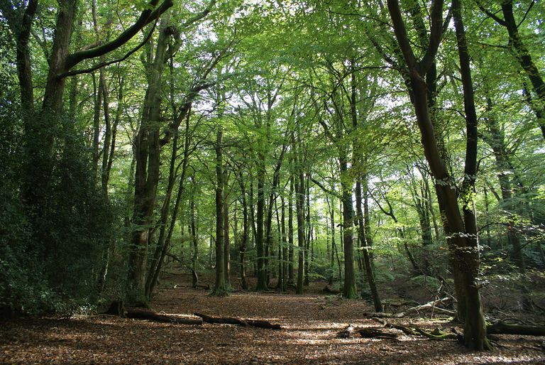The Shaw surname most commonly means clearing in the wood.