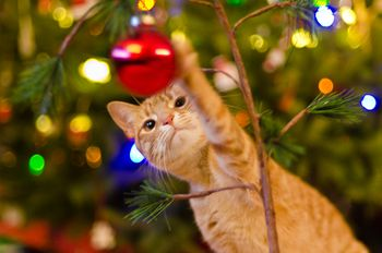 Are Christmas Trees Poisonous to Cats and Dogs?